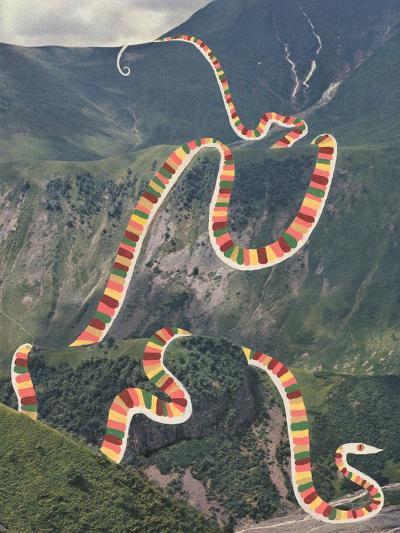 Slinky Snake-Danielle Kroll-Giclee Print