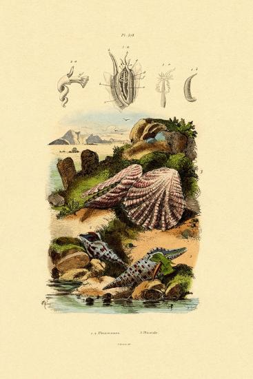 Slit Shells, 1833-39--Giclee Print