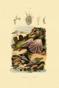 Slit Shells, 1833-39