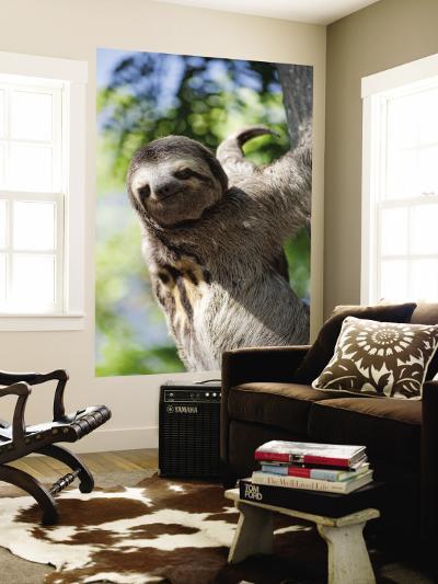 Sloth Living in Parque Centenario-Margie Politzer-Wall Mural