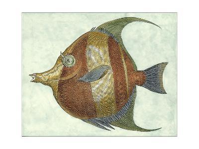 Small Angel Fish II-Jennifer Goldberger-Art Print
