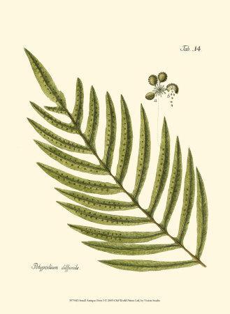 https://imgc.artprintimages.com/img/print/small-antique-fern-i_u-l-f31u4o0.jpg?p=0