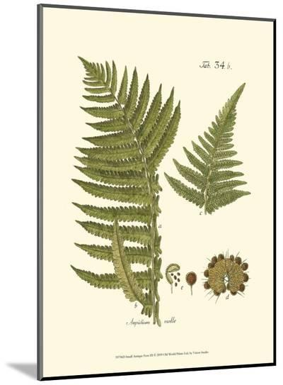 Small Antique Fern III--Mounted Print