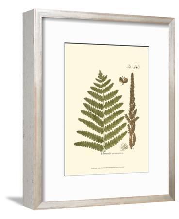 Small Antique Fern VI--Framed Art Print