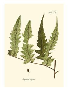 Small Antique Fern VII