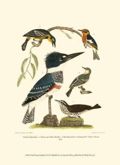 Small Antique Kingfisher I-Alexander Wilson-Art Print