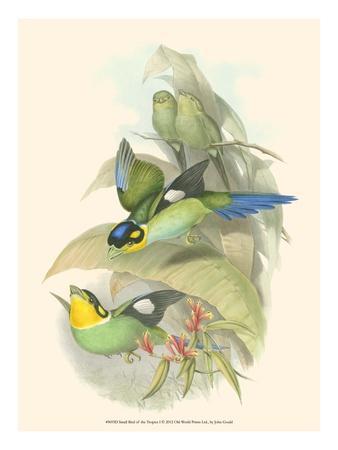 https://imgc.artprintimages.com/img/print/small-bird-of-the-tropics-i_u-l-q11am690.jpg?p=0