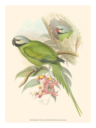 https://imgc.artprintimages.com/img/print/small-bird-of-the-tropics-ii_u-l-q11am2g0.jpg?p=0