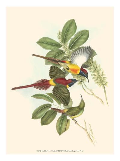 Small Bird of the Tropics III-John Gould-Art Print