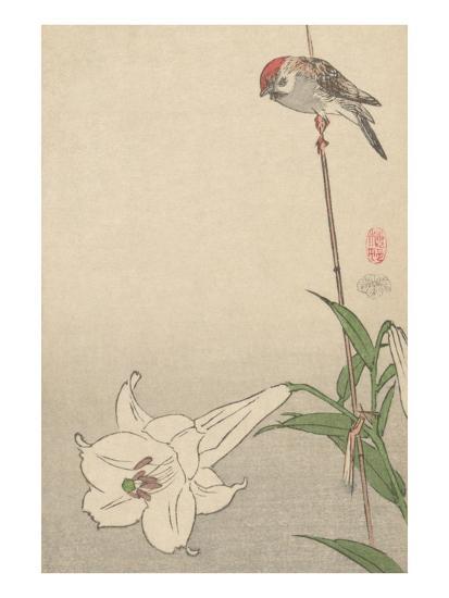 Small Bird on Lily Plant.-Baison-Art Print