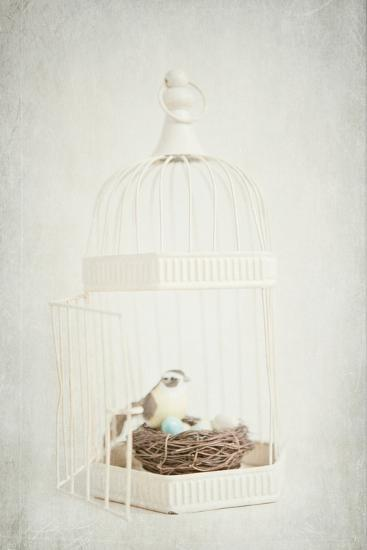 Small Birdcage-Susannah Tucker-Photographic Print