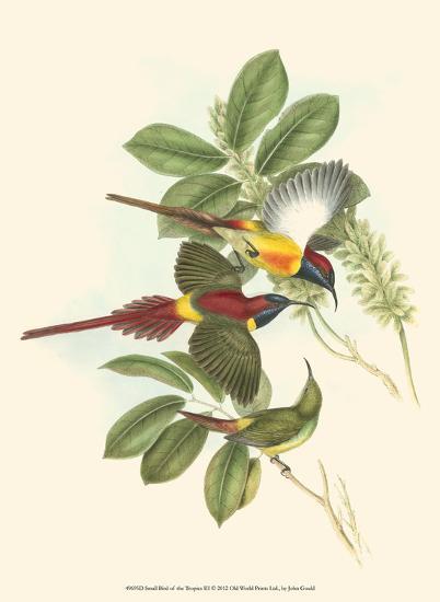 Small Birds of Tropics III-John Gould-Art Print