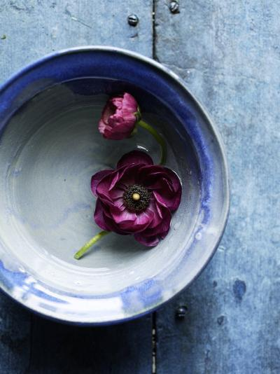Small Blue Bowl, Two Flowers--Photo