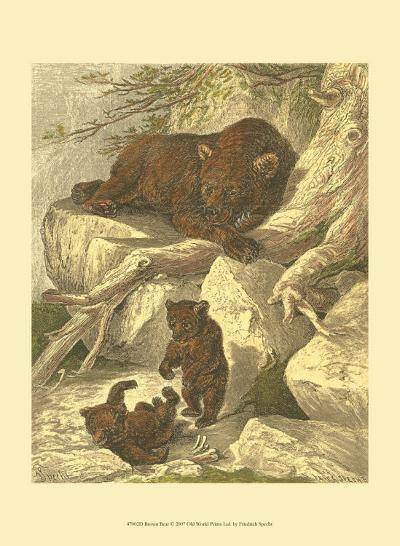 Small Brown Bear-Friedrich Specht-Art Print