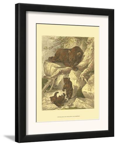 Small Brown Bear-Friedrich Specht-Framed Art Print