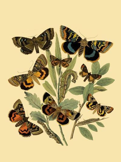 Small Butterfly Gathering III-Vision Studio-Art Print