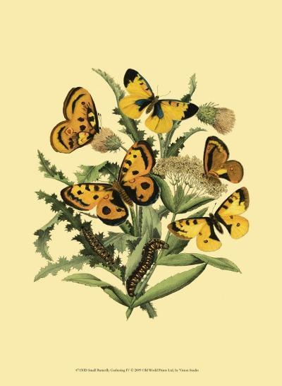 Small Butterfly Gathering IV--Art Print