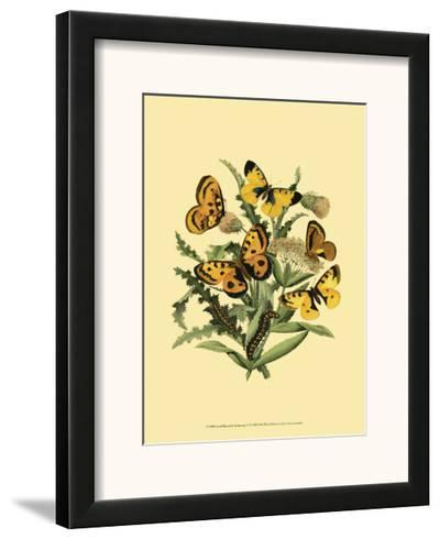 Small Butterfly Gathering IV--Framed Art Print