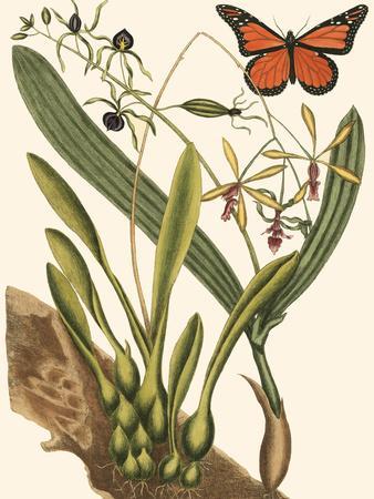 https://imgc.artprintimages.com/img/print/small-catesby-butterfly-and-botanical-iv_u-l-q11aq1l0.jpg?p=0