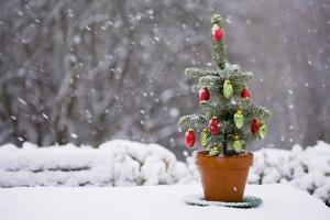 Small Christmas Tree