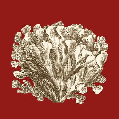Small Coral on Red III-Vision Studio-Art Print