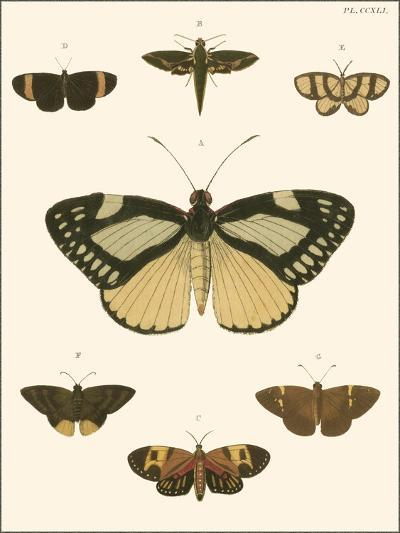 Small Heirloom Butterflies II-Pieter Cramer-Art Print