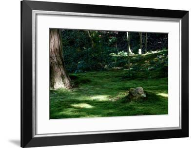 Small Jizo Stand Between Large Cedar Trees at Sanzen-In Temple-Heather Perry-Framed Photographic Print