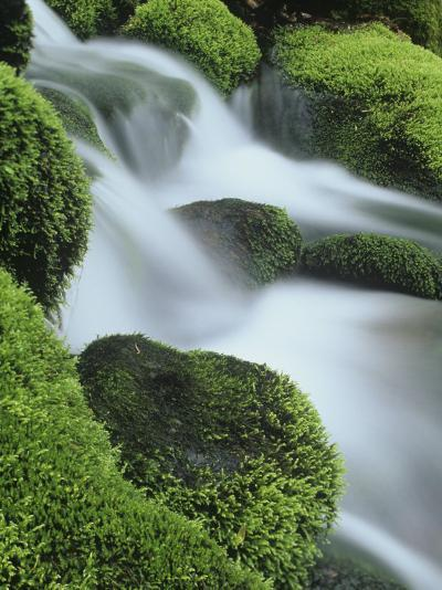Small Mountain Stream and Moss-Covered Rocks, Great Smoky Mountains National Park, Tennessee, USA-Adam Jones-Photographic Print