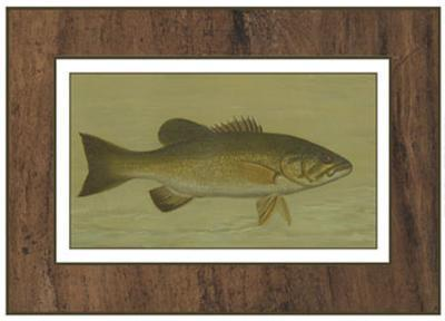 Small-Mouthed Black Bass-Harris-Art Print