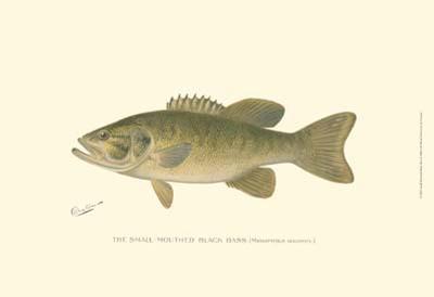 Small-Mouthed Black Bass-Denton-Art Print