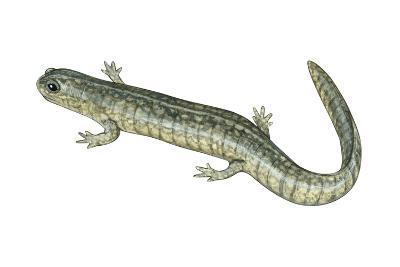 Small-Mouthed Salamander (Ambystoma Texanum), Amphibians-Encyclopaedia Britannica-Art Print