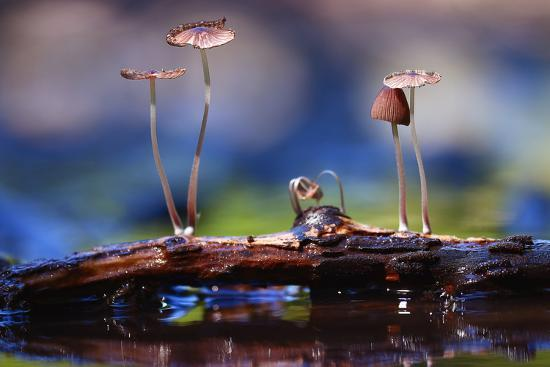 Small Mushrooms Toadstools Macro Poisonous-Kichigin-Photographic Print