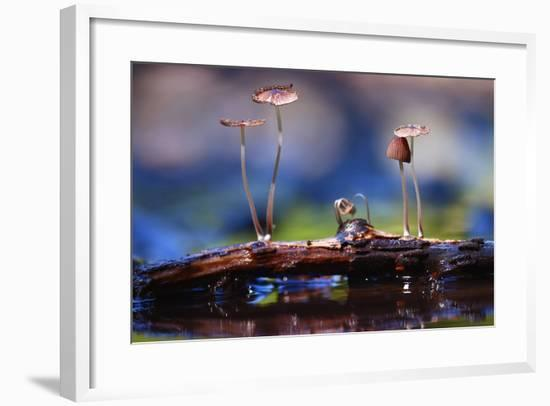 Small Mushrooms Toadstools Macro Poisonous-Kichigin-Framed Photographic Print