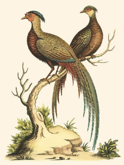 Small Regal Pheasants II-George Edwards-Art Print