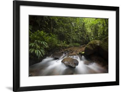 Small Stream in the Queros Wachiperi Conservation Concession-Gabby Salazar-Framed Photographic Print