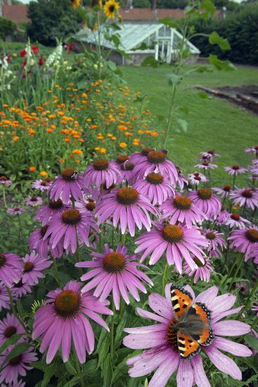 Small Tortoisehell Butterfly (Aglais Urticae)-Ernie Janes-Photographic Print