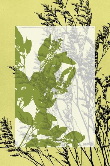 Small Translucent Wildflowers III-Jennifer Goldberger-Art Print