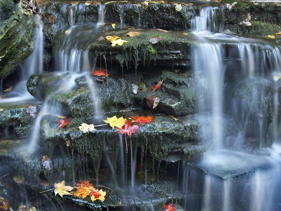 Small Waterfall on Kitchen Creek, Ricketts Glen State Park, Pennsylvania, Usa-Tim Fitzharris-Photographic Print