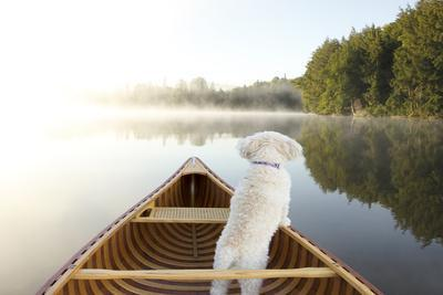 https://imgc.artprintimages.com/img/print/small-white-cockapoo-dog-navigating-from-the-bow-of-a-canoe-on-a-misty-lake-ontario-canada_u-l-q1a38240.jpg?p=0