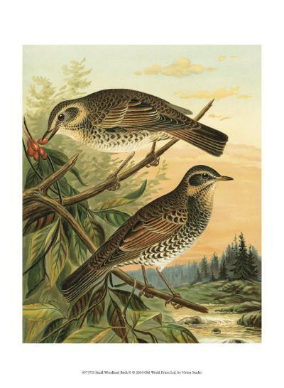 Small Woodland Birds II--Art Print