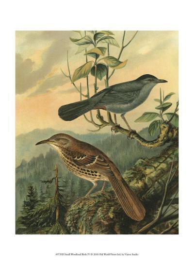 Small Woodland Birds IV--Art Print