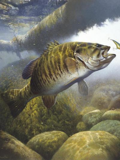 Smallmouth Bass-Larry Tople-Giclee Print