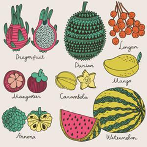 Bright Tropical Fruit Set in Vector. Dragon Fruit, Durian, Longan, Mangosteen, Carambola, Mango, An by smilewithjul