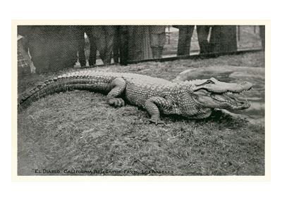 https://imgc.artprintimages.com/img/print/smiling-alligator_u-l-pi1kwa0.jpg?p=0