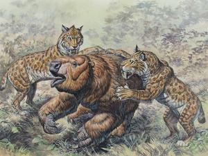 Smilodon Dirk-Toothed Cats Attacking a Glossotherium