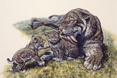 Smilodon Sabertooth Mother and Her Cubs--Art Print