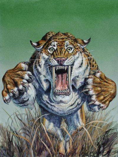 Smilodon Springing Forward at Viewer, Pleistocene Epoch--Art Print