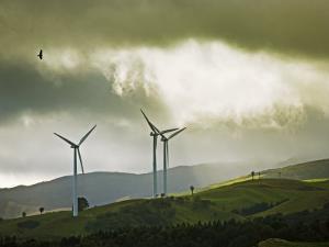 Wind Turbines and Soaring Bird of Prey, Ruahine Ranges, Manawatu, North Island, New Zealand by Smith Don
