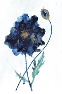 Modern Poppy 2 by Smith Haynes