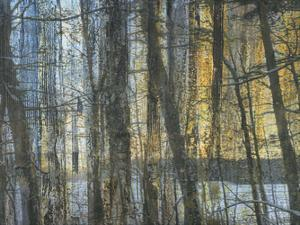 Sunshine Through The Limbs 1 by Smith Haynes